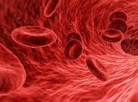 血管.赤血球画像
