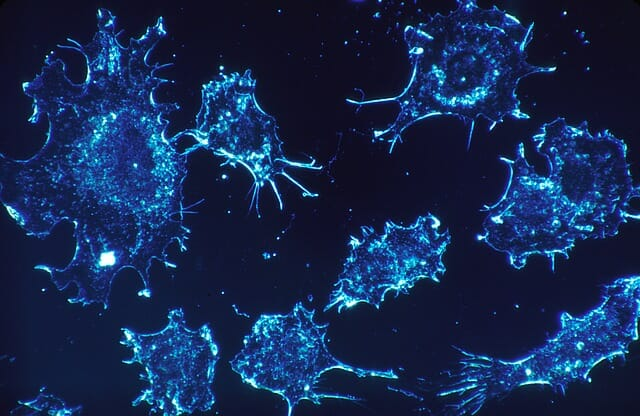 cancer-cells640